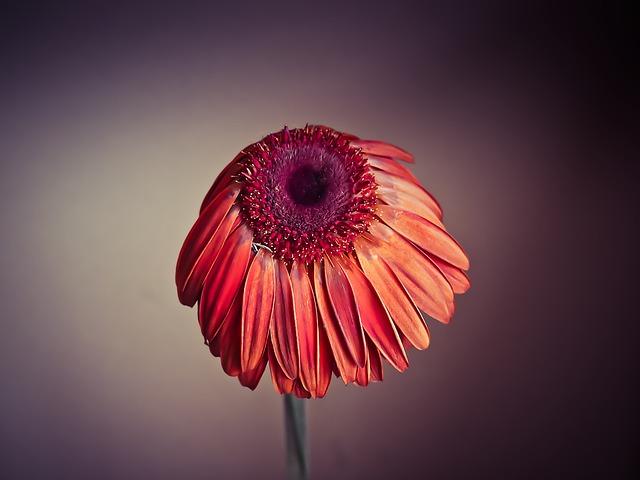 flower-1156533_640